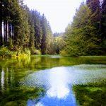 5 Geheimnisse, wie wir uns durch die Natur als Kraft-, Erfolgs- und Inspirationsquelle weiterentwickeln können!